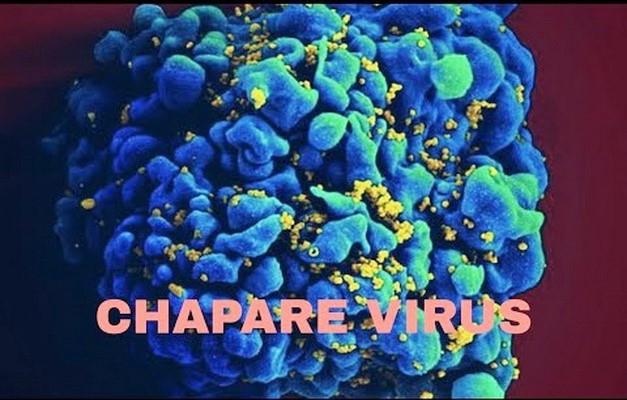 ViruS Chapare và nguy cơ lây nhiễm từ người sang người