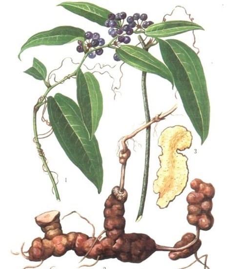 Cây Bạch Linh