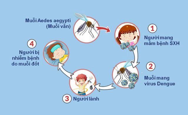 Muỗi vằn lây truyền virus Dengue gây bệnh sốt xuất huyết