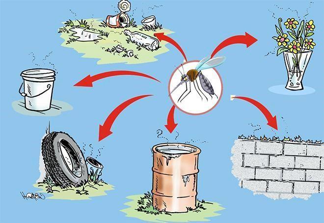 Cần loại bỏ môi trường phát triển của muỗi để việc phòng bệnh hiệu quả hơn