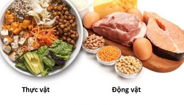 Thiếu protein, con người sẽ không hoạt động đượcProtein có nguồn gốc từ động vật và thực vật.