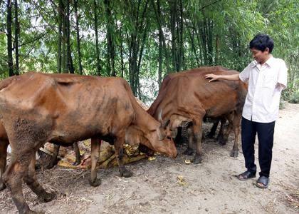 Phát triển chăn nuôi giúp gia đình anh Sơn ổn định cuộc sống.